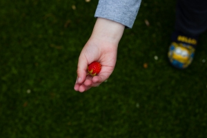 documentary family photography dorset fruit picking