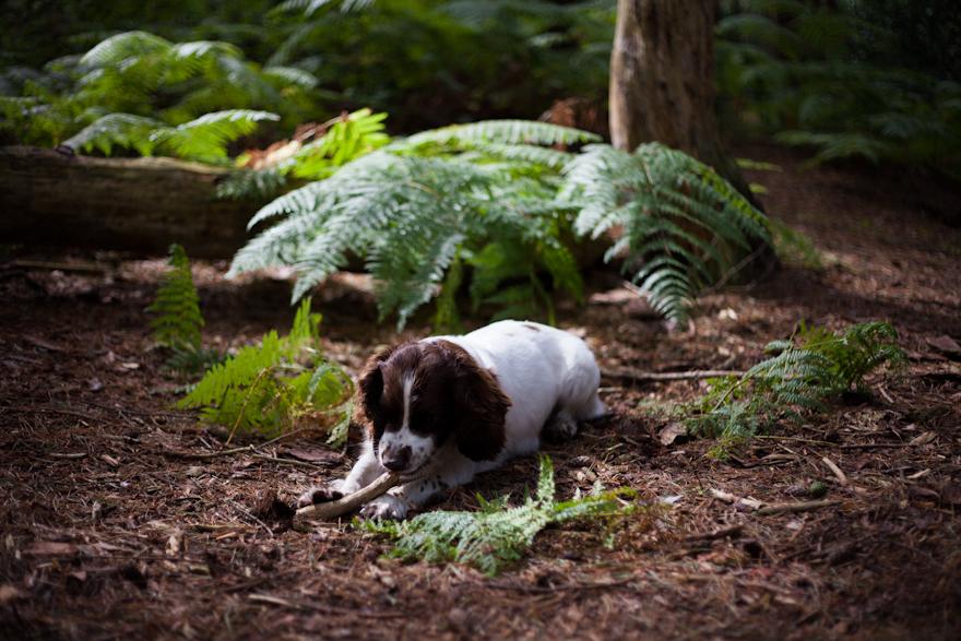 natural-pet-photography-dorset-hampshire-wiltshire